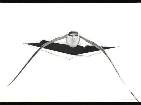 Massimiliano Galliani, Attraverso #4, 2019, matita su carta Fabriano, cm 70x100